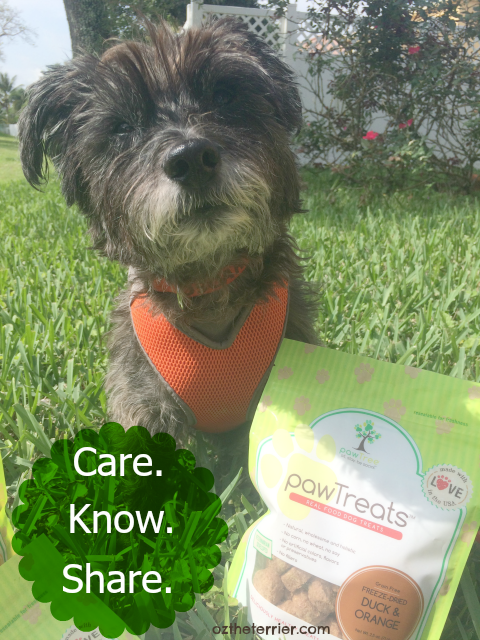 A better way to care, know and share about pets with pawTree