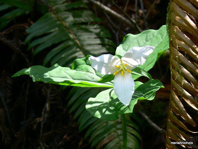 disability and global expansion: image of a white floor blooming with ferns behind and the light directly on the flower