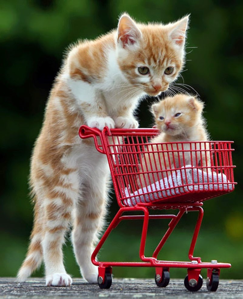 30. A mother cat adorably pushing her kitten in a mini shopping cart.  - 30 Animals With Their Adorable Mini-Me Counterparts