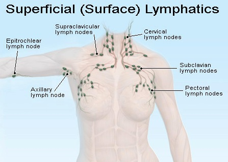 Chest Lymph Nodes Diagram