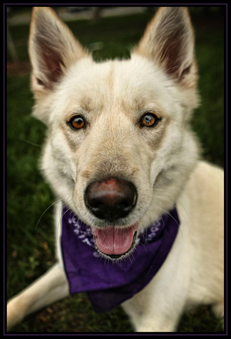 Houston Spca Adoptable Dogs
