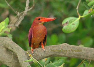 Beautiful birds of Nijhum Dweep