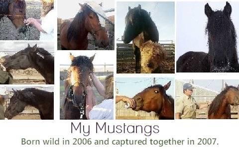 My Mustangs.