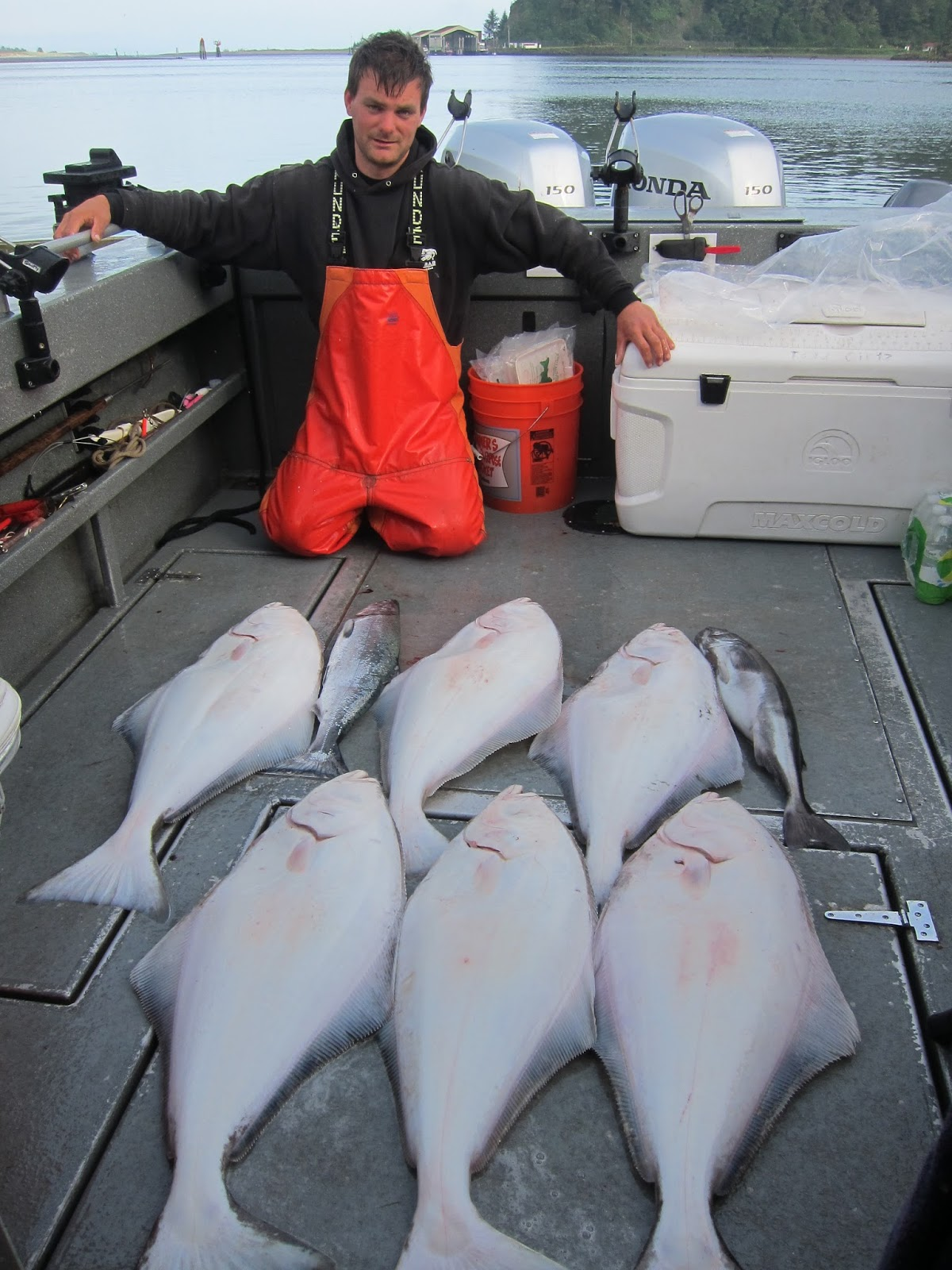 Westport halibut autos post for Halibut fishing charters washington