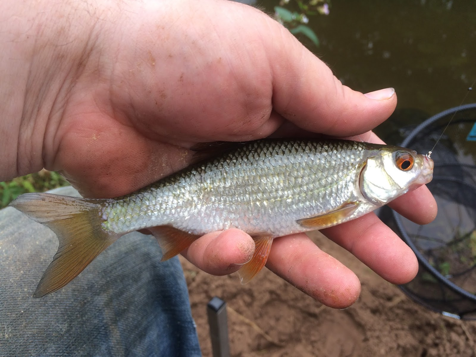 Danny 39 s angling blog week in the life of a blogger and for 94 1 the fish