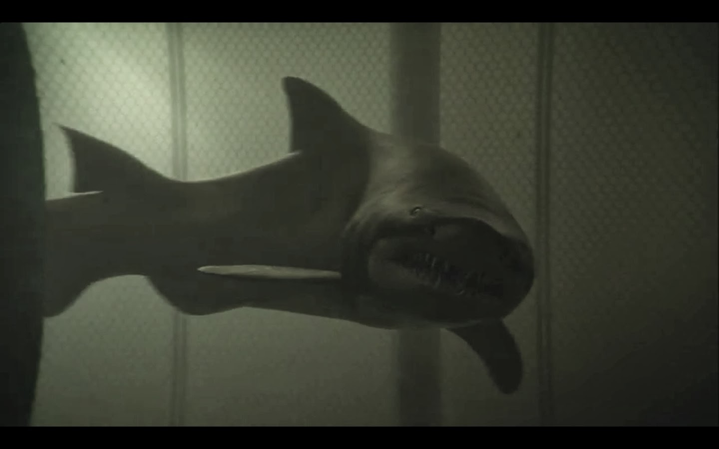 Sand tiger shark information amp pictures of sand tiger sharks - Movie Still Of Tiger Shark Getting Ready To Attack