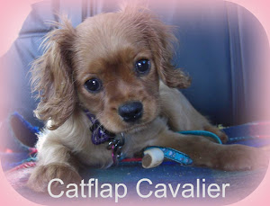 The Catflap Cavalier