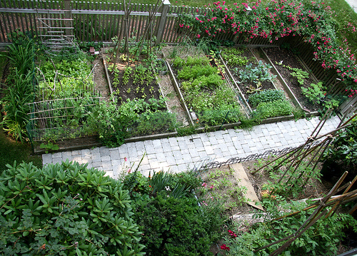 Landscaping With Vegetables Design : Container gardening ideas