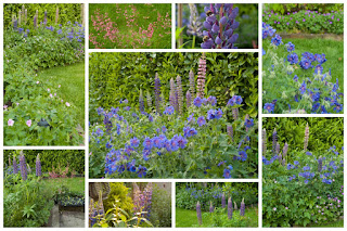 Border Tuin English border