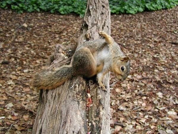 Here Are 24 Awesome Things You Didn't Know About Animals. #11 Just Made My Week. - Millions of trees grow every year because grey squirrels bury their nuts