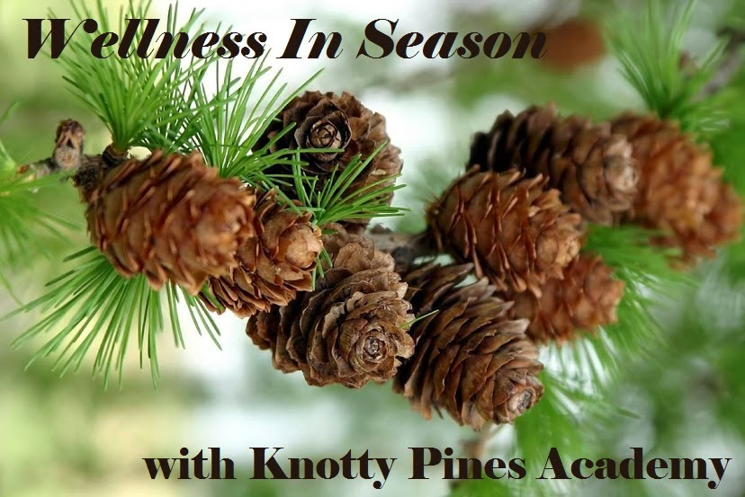 Knotty Pines Academy