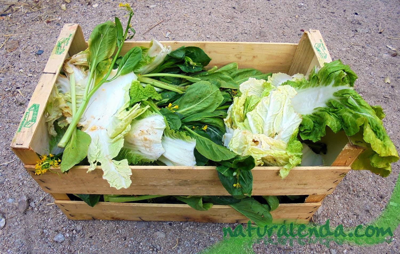 caja de restos de verduras reciclados