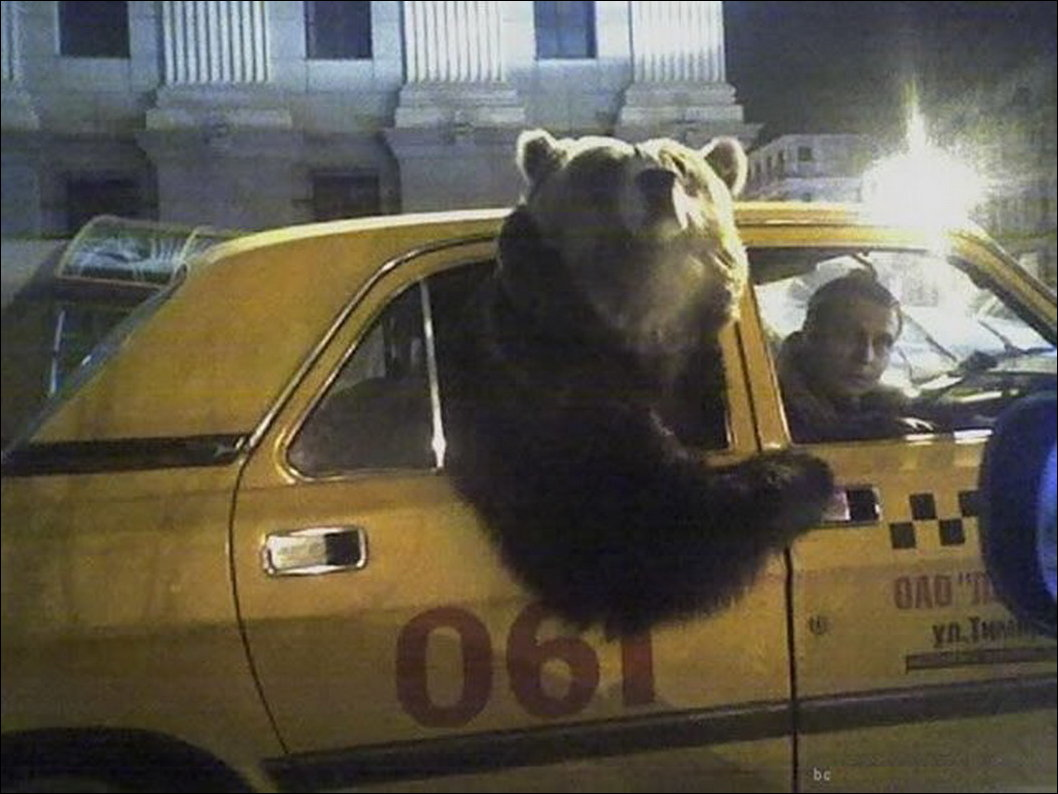 Terry Blue's taxi and Uber reports can be foud here at the Center Bear Blog