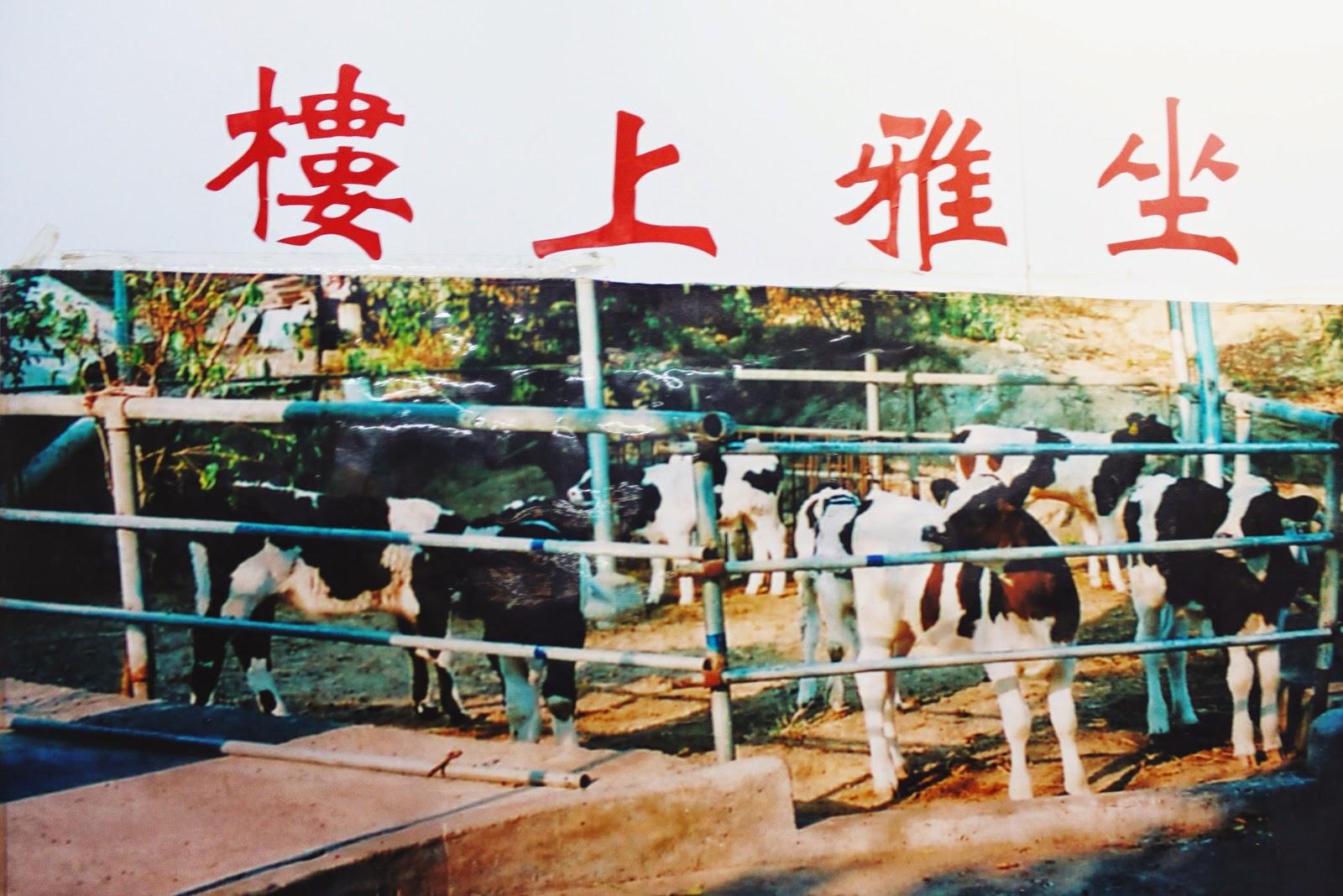薑汁撞奶 Ginger Milk Curd , 義順牛奶公司 Yee Shun Milk Company @ 澳門新馬路20號 Senado Square, Macau