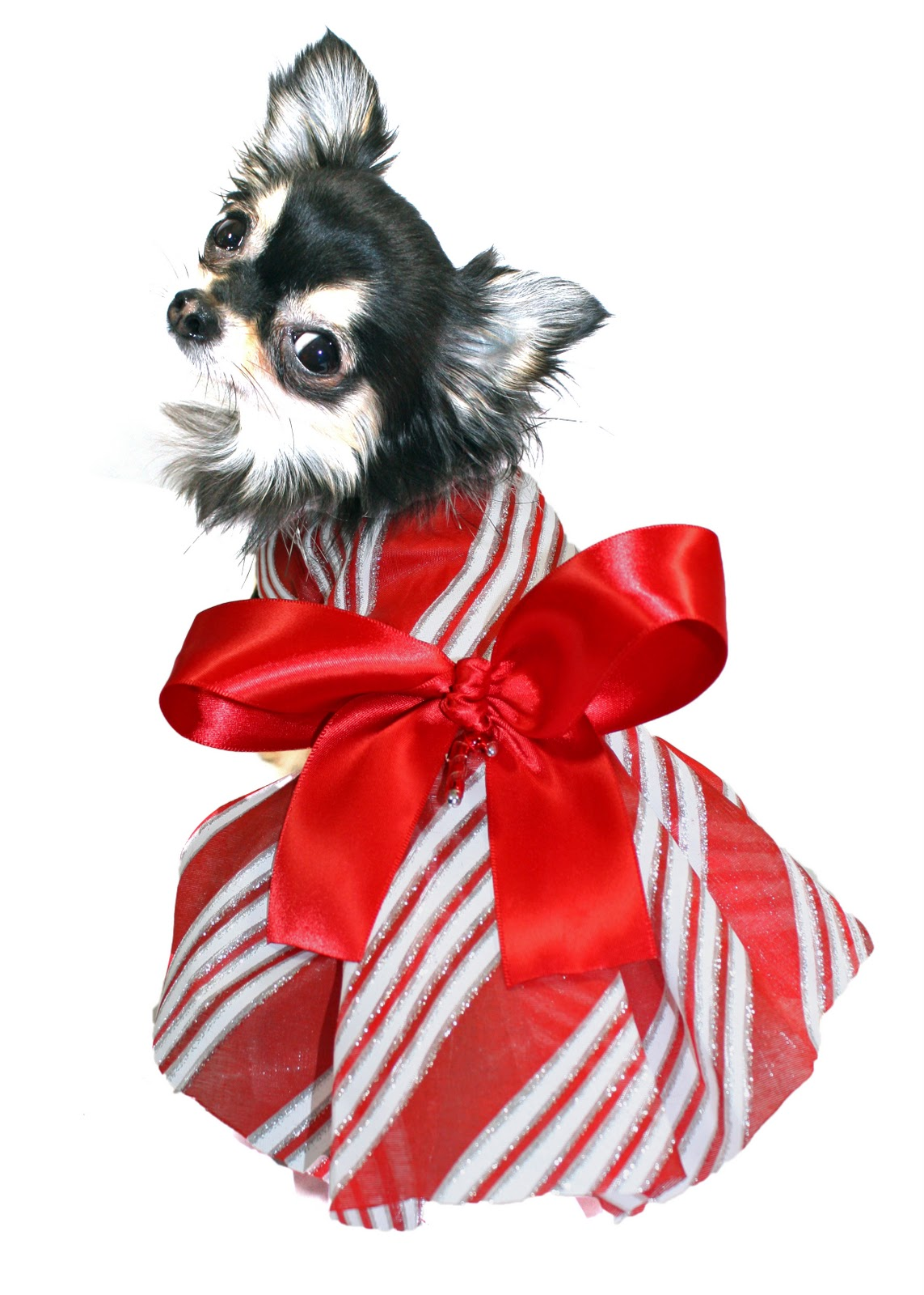 KO Couture Pet Fashion: New Christmas Dog Dresses!!!