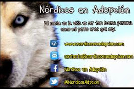 Teaming Nórdicos en Adopción