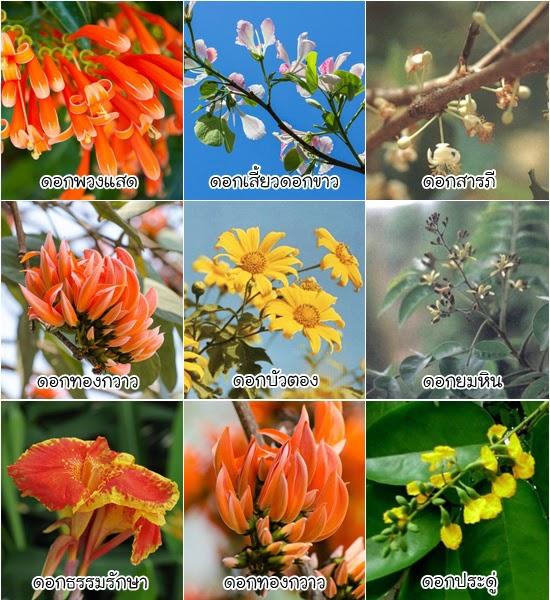 ดอกไม้ประจำจังหวัดต่าง ๆ ของประเทศไทย