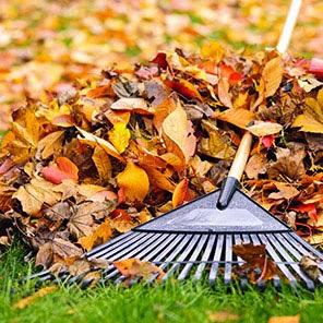 mengumpulkan daun unuk kompos