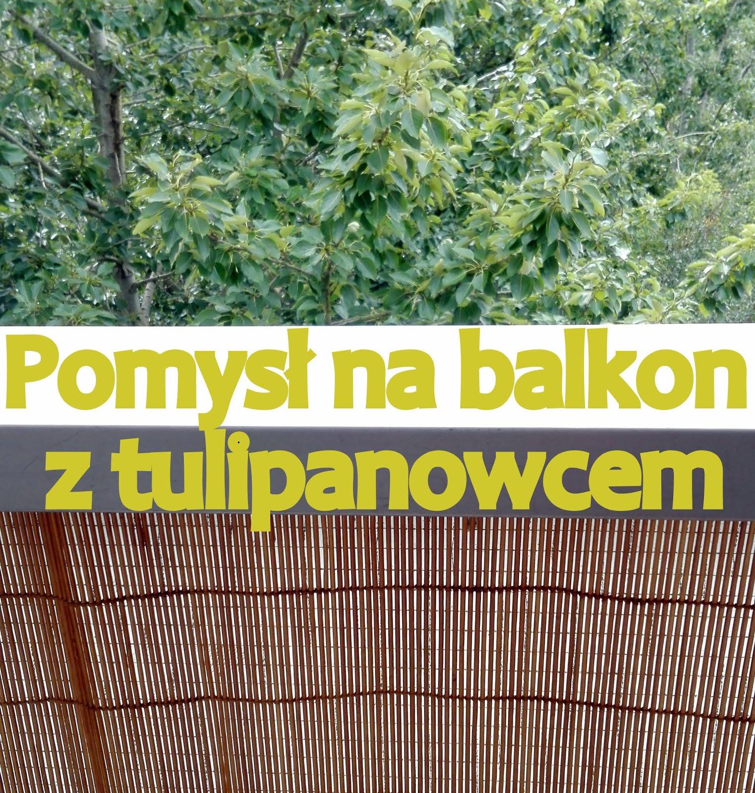 Pomysł na balkon - link party z tulipanowcem