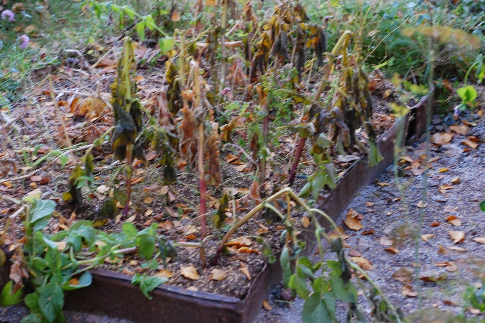 Svanå trädgård: en kall vind drog fram...