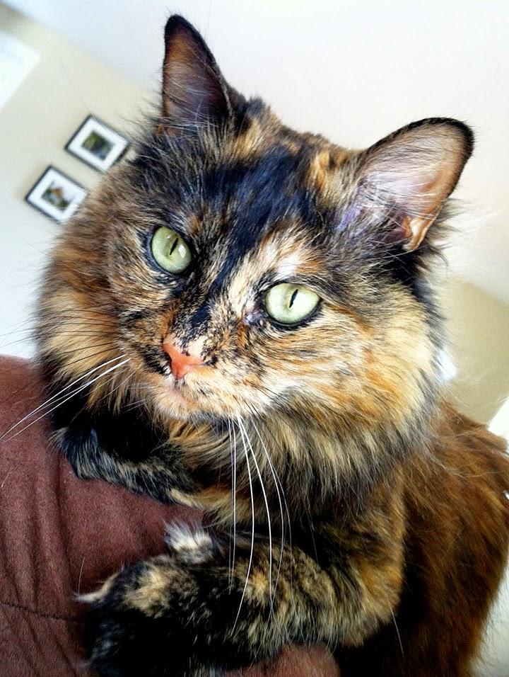 Rachel Maguire's cat - awwww.