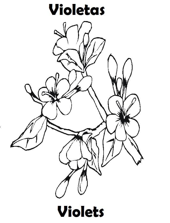 Lujoso Página Para Colorear De Flores Violetas Composición - Dibujos ...