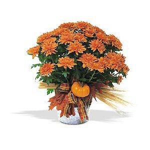 Order an Autumn Mum Plant