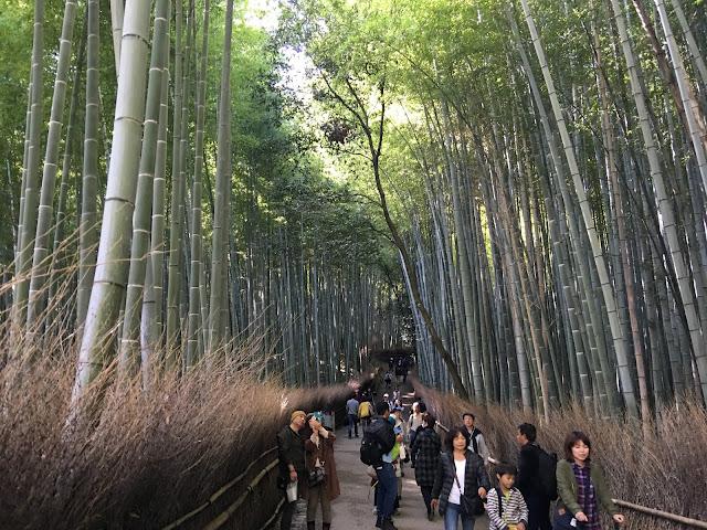 kyoto arashiyama chikurin bamboo forest