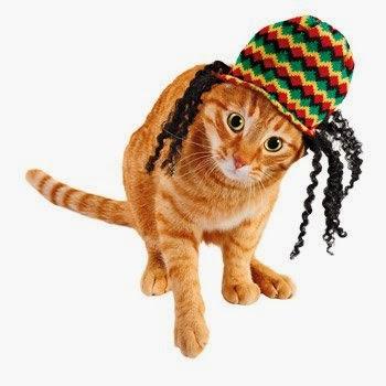 Halloween Costumes for Cats - Reggae Rocker Cat Costume
