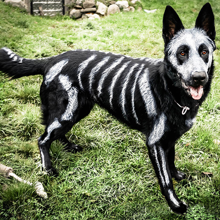 http://www.boredpanda.com/skeleton-dog-halloween-costume-non-toxic-pet-paint/