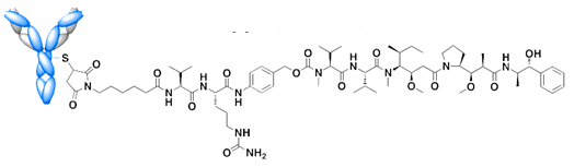 Antibody Drug Conjugate (ADC) attached to Mono-MethylAuristatin E (MMAE) via a stable valine-citrulline dipeptide linker (Glembatumomab vedotin is a new drug ondergoing phase II clinical trials for breast cancer and melanoma (CDX-011 Celldex Therapeutics)
