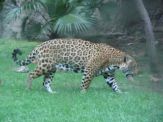 ملف كامل عن اجمل واروع الصور للحيوانات  المفترسة   حيوانات الغابة  1034908287_71e7a1d7d1