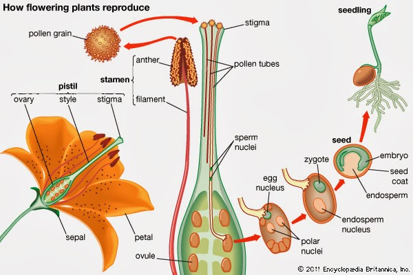 Reproduction in Plants | Online Education And Tech News