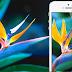 """Wallpaper da Tela Retina do iPhone 5: """"Bird of Paradise"""" - Ave do Paraíso"""
