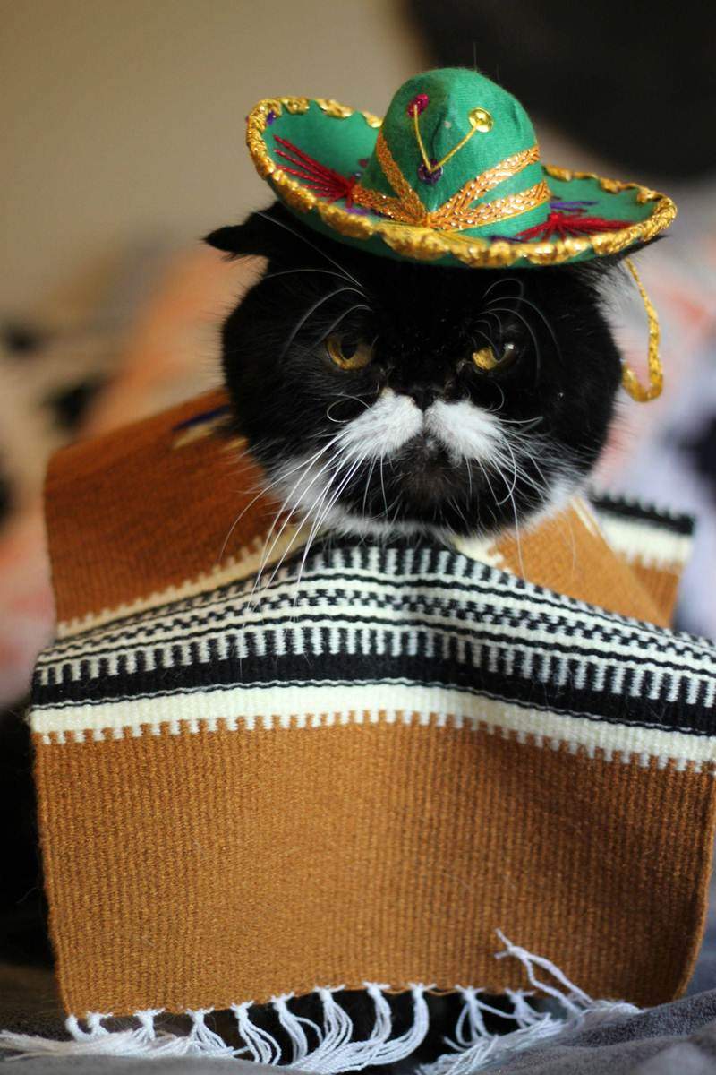 Funny and creative pet costumes, cat costumes, dressed up cats