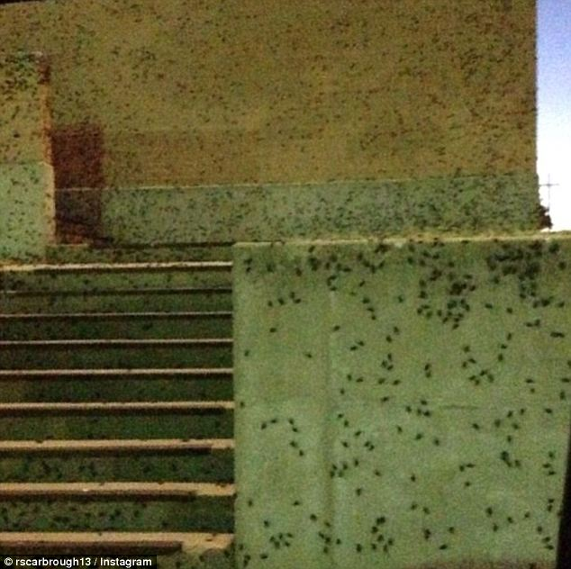Biblical Plague of CRICKETS Terrorize Oklahoma  And Smell 'Like Rotten Meat'
