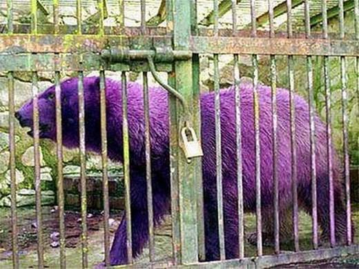 10 Hewan dengan Warna dan Corak Tidak Biasa 13:03 basir