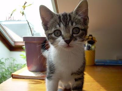 Rosie as a kitten