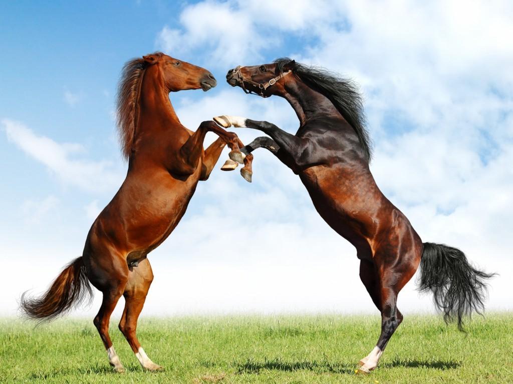 http://4.bp.blogspot.com/-K69NQ7yteGU/TlP2EEOlCyI/AAAAAAAACLM/boFh6pnGgQk/s1600/Cute+horse+wallpaper4.jpg