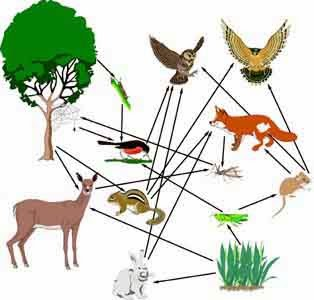 Land food web example
