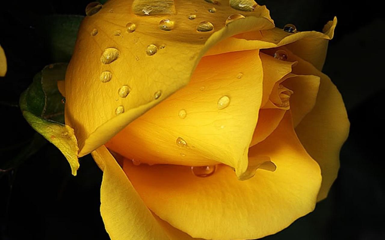 imagini cu flori de camp macul - Poze cu flori hd plante