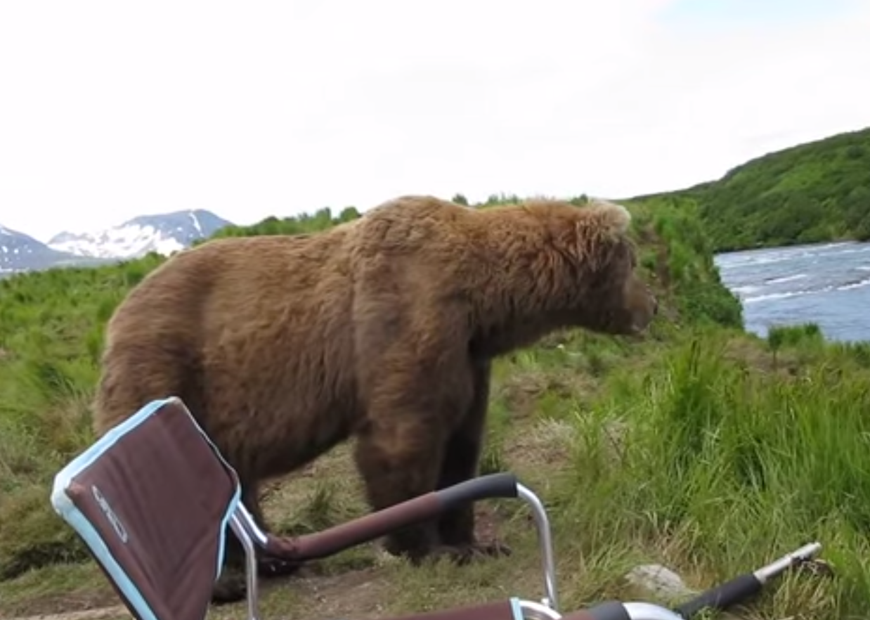 He walks over, surveys what's going on down at the riverbed… - A Brown Bear Sat Down Right Next To Him While He Filmed It All!