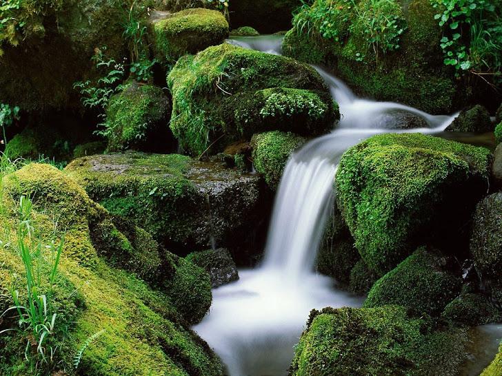Natureza... A Fonte da Vida!!!