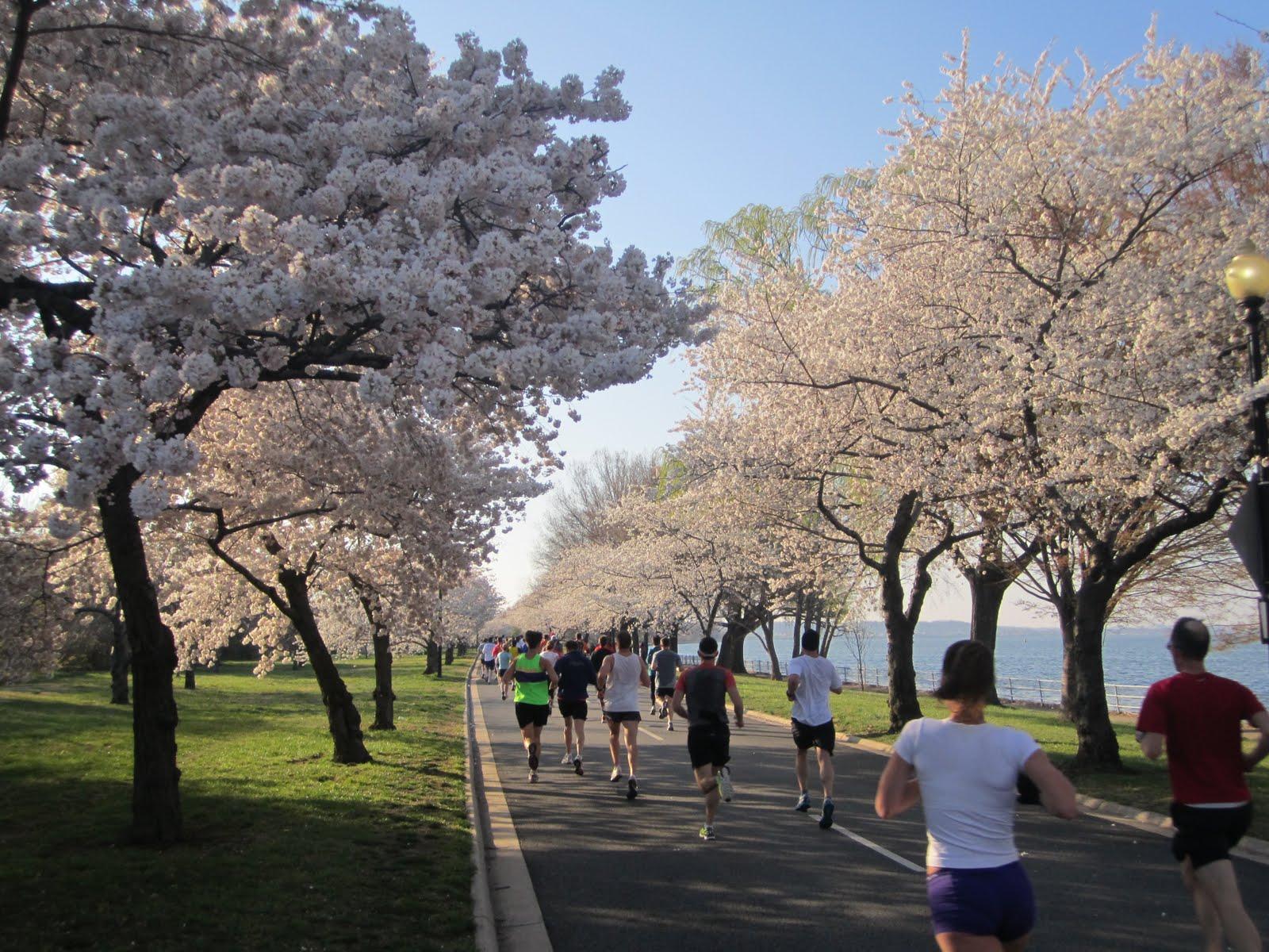 cherry tree 10 miler washington dc jon kroll washington dc weekend and cherry blossom ten mile race