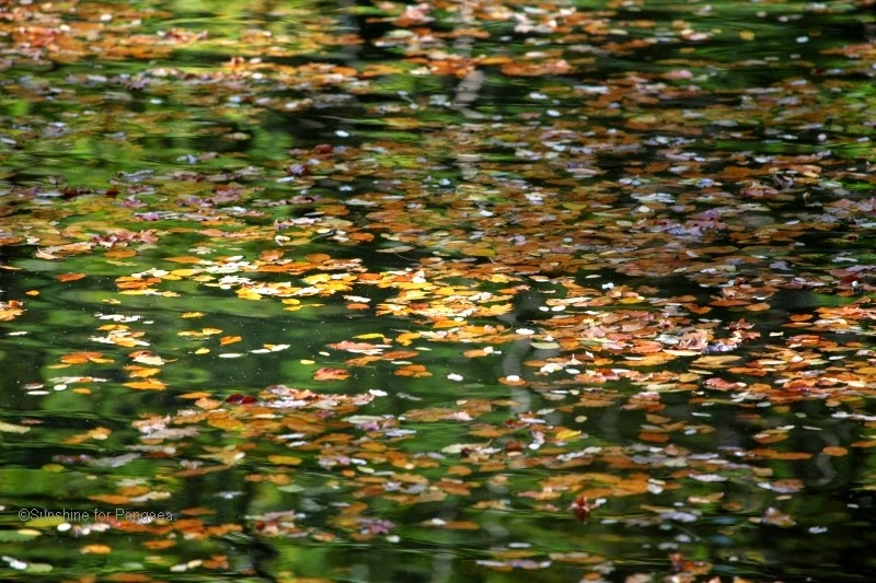 leafes on water