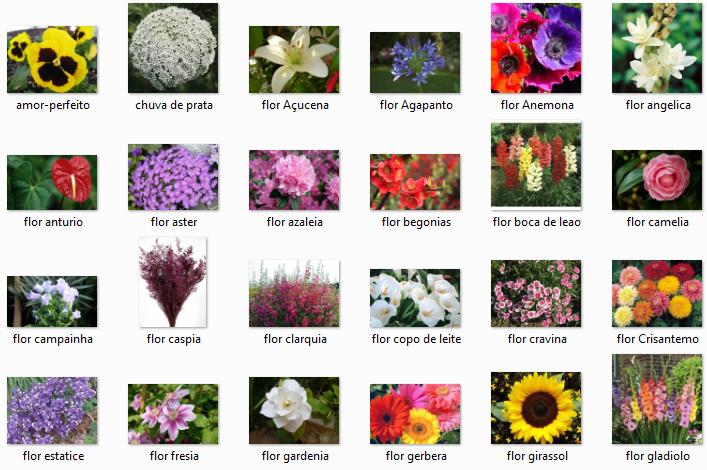 tipos de plantas nomes v rias id ias de