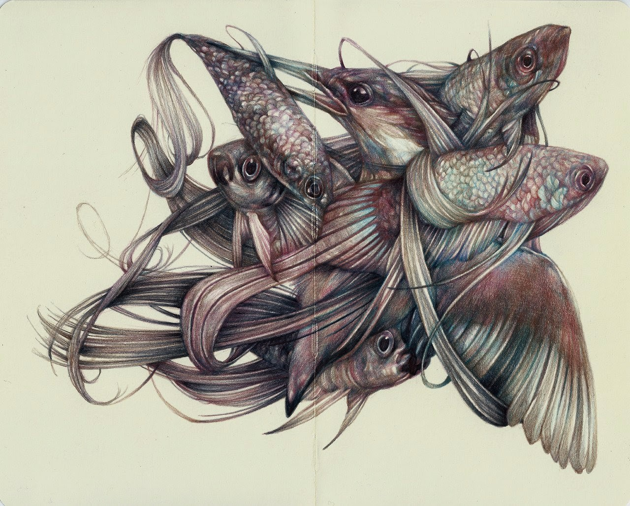 17-Marco-Mazzoni-Surreal-Animal-Drawings-www-designstack-co