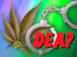dea e a regulamentação da cannabis