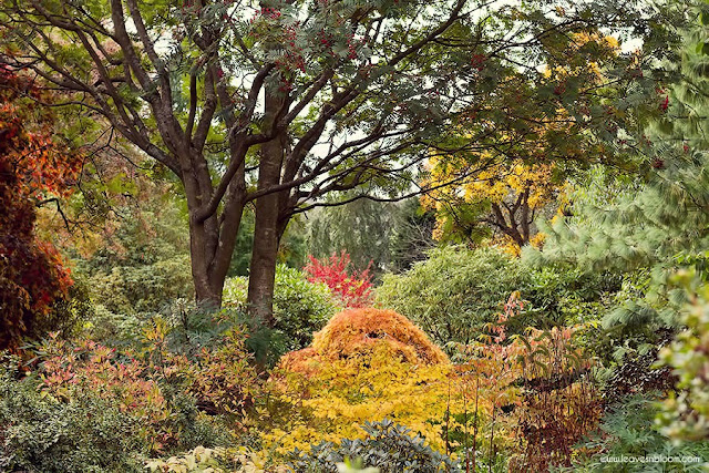 one of the views of Branklyn Garden in October