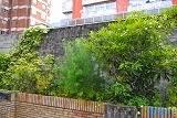 Herbas e arbustos do cole